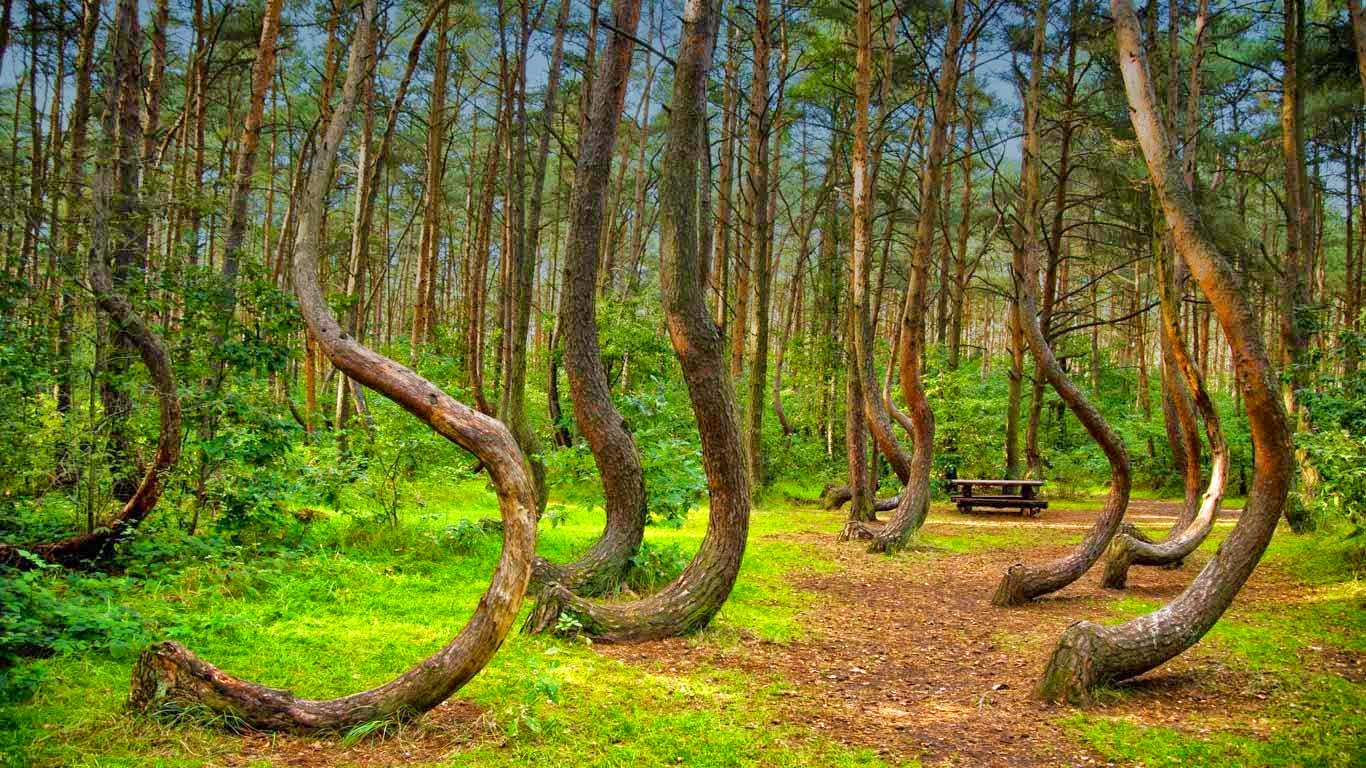 Crooked Forest, Polşa